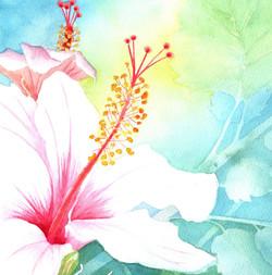 144. Hibiscus