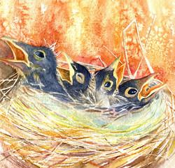 133. Baby Birds