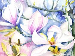 151. Magnolias in Jills Garden