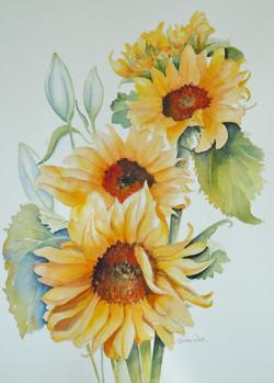 43. Sunflowers