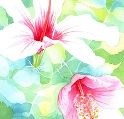 143. Hibiscus 2