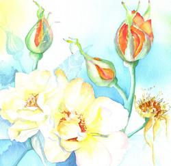 156. Orange Roses 2