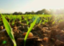 Organik tohumların filizlenmesi, tarım, organik tarım, organik ötesi, tatuta, buğday derneği, belgesel film
