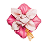 pngtree-korean-traditional-new-year-pink-gift-box-png-image_3700947_edited.png