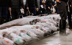 The tuna auction