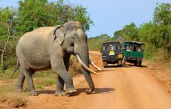 Villpatthu elephant