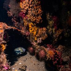 St Leonards Underwater Course-1688.jpg