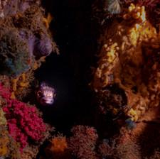 St Leonards Underwater Course-1686.jpg
