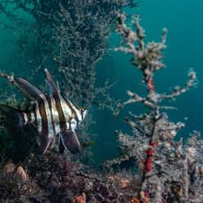 St Leonards Underwater Course-1785.jpg