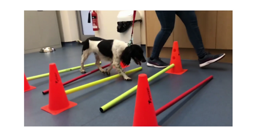 canine physiotherapy - pole work for dogs