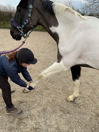 passive stretches on a horse