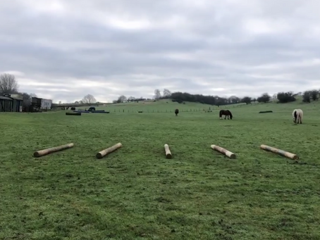 Pole work for horses with Osetoarthritis