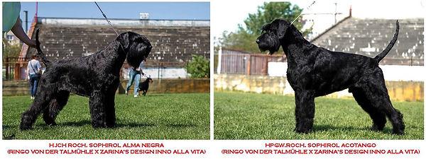 alma_tango_stm18.jpg
