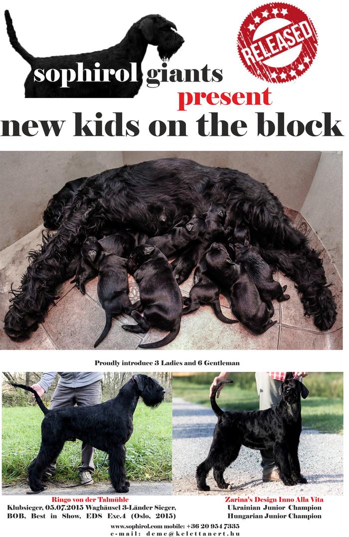 WE HAVE BABIES!