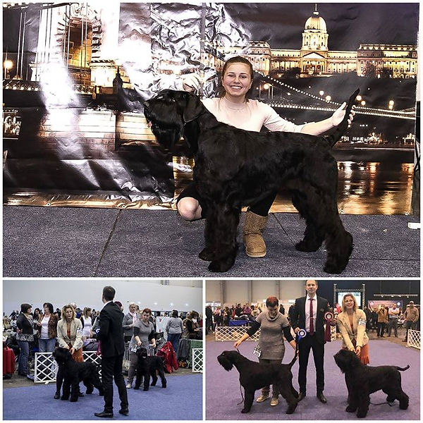 President's Cup International Dog Show,