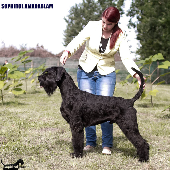 National Dogshow in Hungary