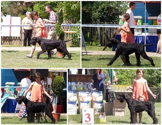 Zsozsi's first Junior Handler competiti