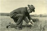 How a Kansas Farm Boy Saved the Medjool Date