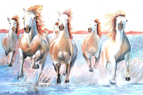 Wild Horses of the Carmargue, France