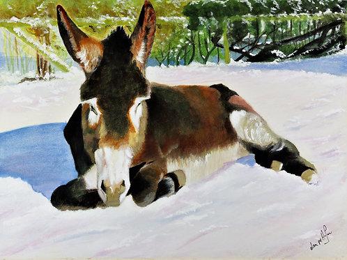 Snow Donkey in Sunshine - PRINT