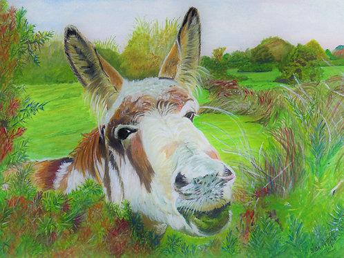 New Forest Donkey - Print