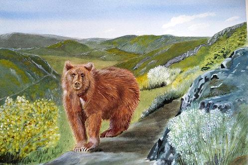 Iberian Brown Bear