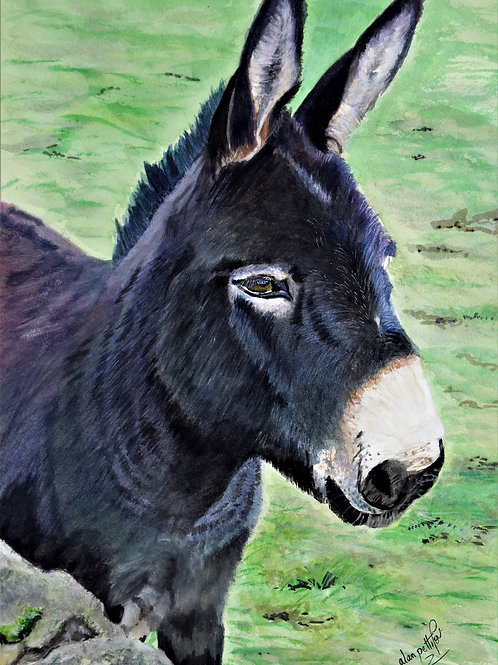 Phil The Donkey - PRINT