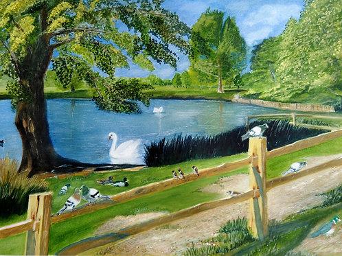 Pond Gathering