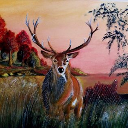 Stag At Sunset - PRINT