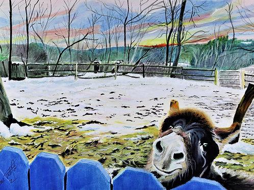 Donkey Sunset - PRINT