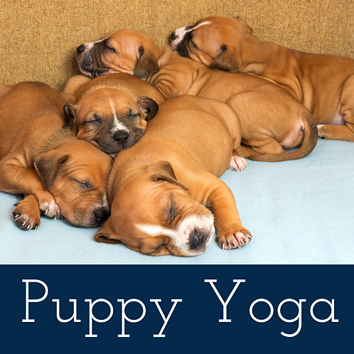 Puppy Yoga 12:30 pm