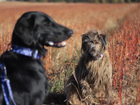 #psiakiadopciaki, czyli jak przygotować się do adopcji psa