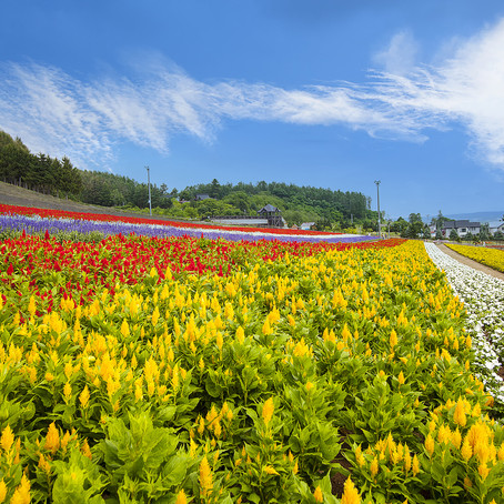 What to do in Sapporo in summer – Japan's top ski destination blossoms under blue skies