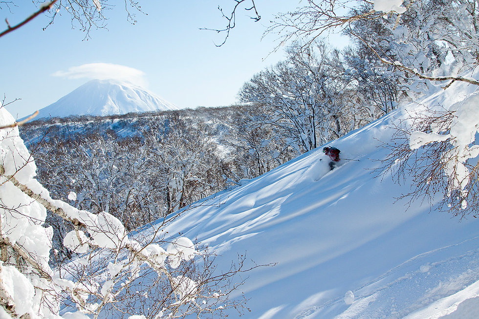 niseko-pow-trees-credit-niseko-promotion
