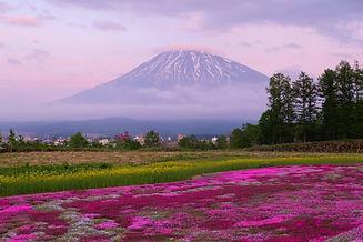 yotei summer bloom.jpg