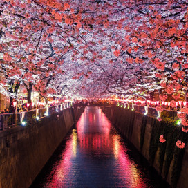 A Guide To Spring Cherry Blossom Bloom in Japan