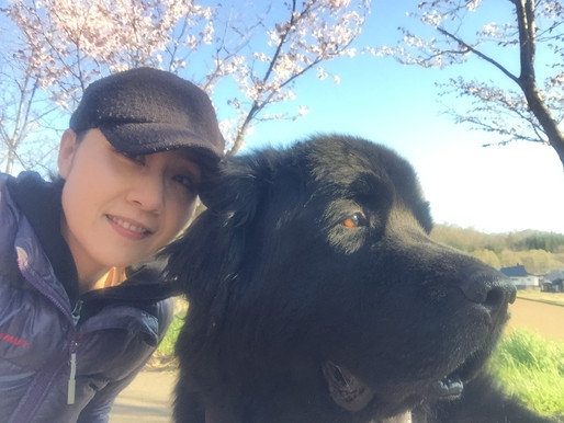 Meet Rena Okino - SnowDog Village's new General Manager in Japan!