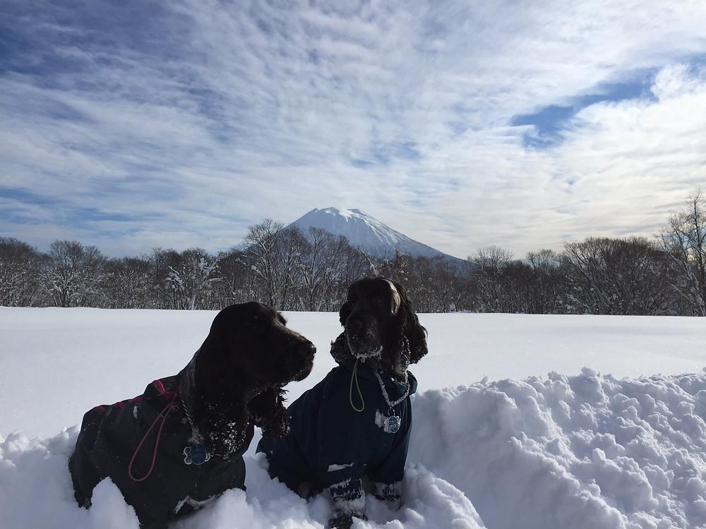 The Original Snowdogs