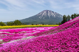 Niseko comes alive with colour in spring