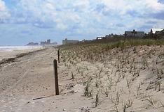 Sand Dune .jpg