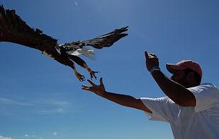 shiv-kapila-releasing-african-fish-eagle.-copyright-shiv-kapila-1280x851-1-3-768x511.jpg