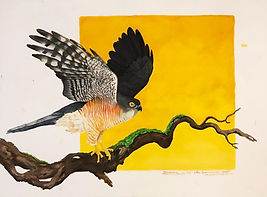 little-sparrowhawk-finished-2.jpeg