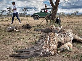 01-vulture-poisoning.jpg