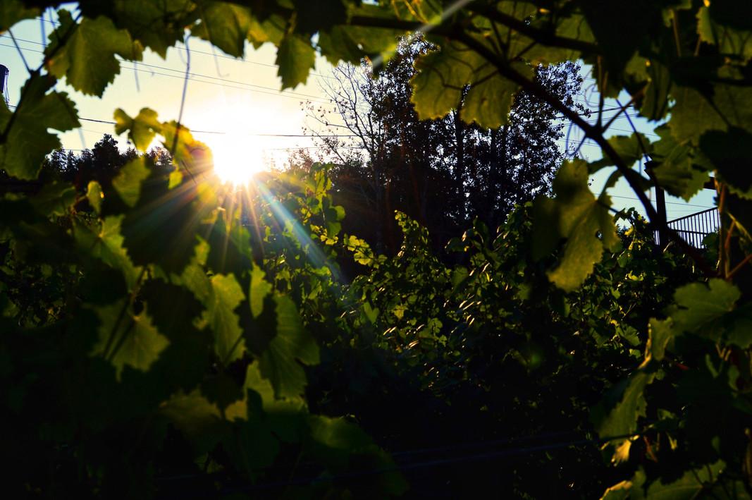 JPEG image-B3A86E8BD94A-1.jpeg