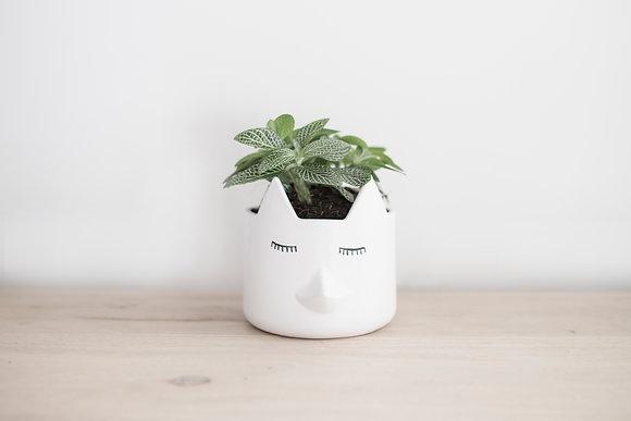 Wild Thing Vase