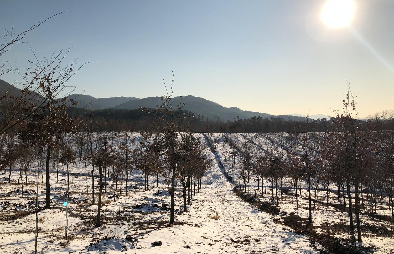 여주 농장 - 2018년 겨울