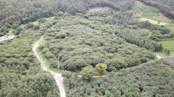 JINCHEON PLANTATION - 진천농장