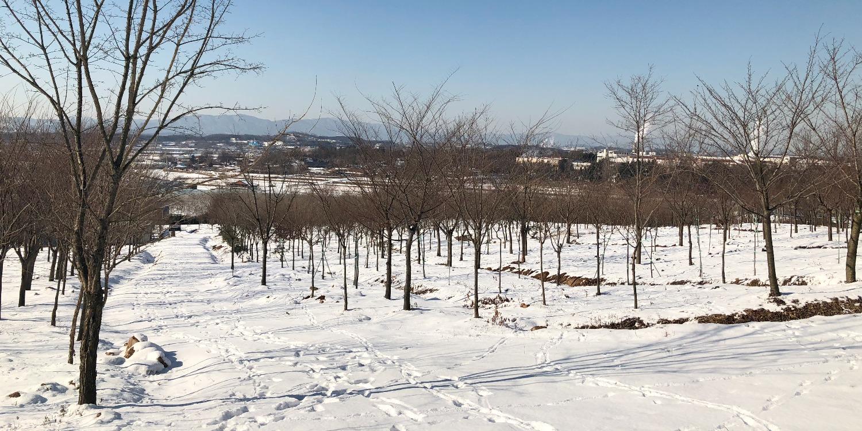 진천 농장 - 2018년 겨울