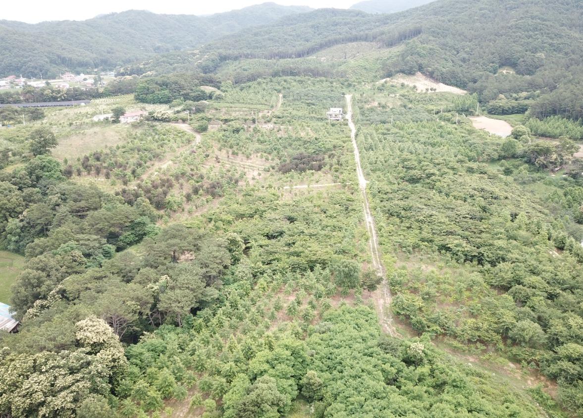 YEOJU PLANTATION - 여주농장