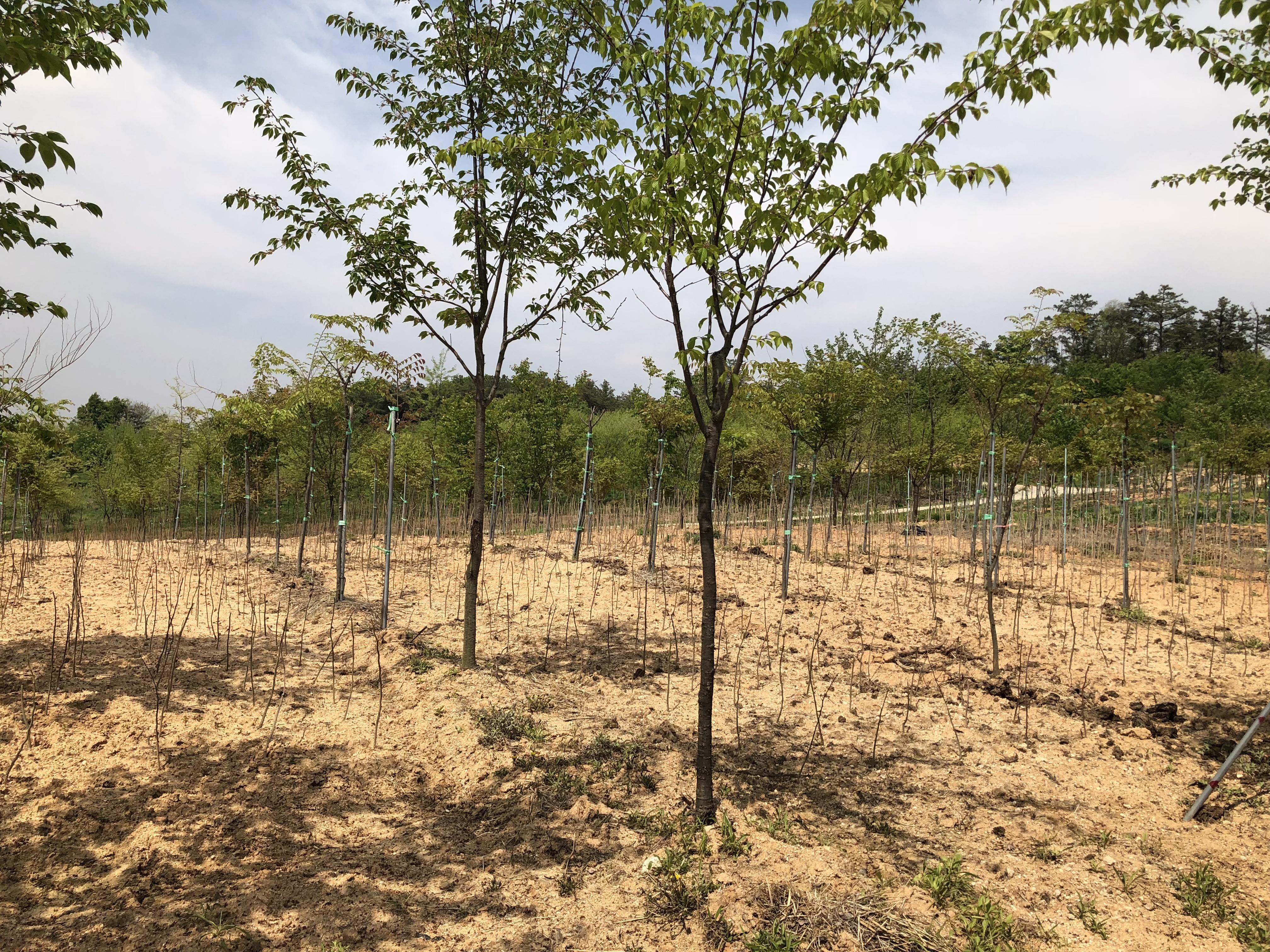 여주농장 - 관목식재
